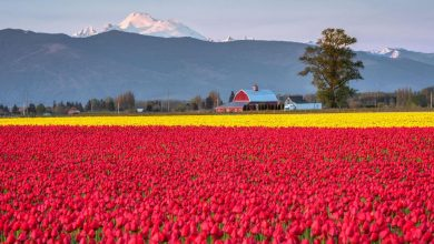 Photo of Photographie du jour #497 : Skagit Valley