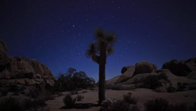 Photo of Joshua Tree dans toute sa splendeur