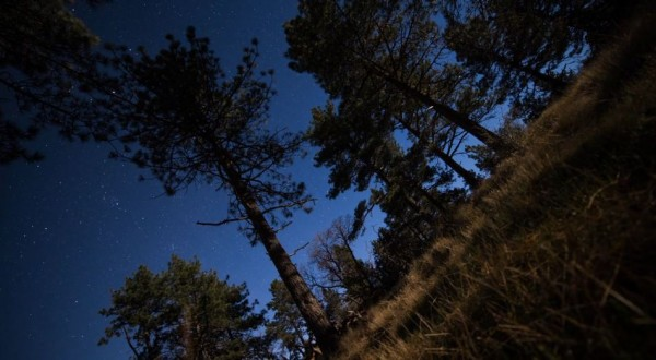 voyage-time-lapse-foret-cleveland