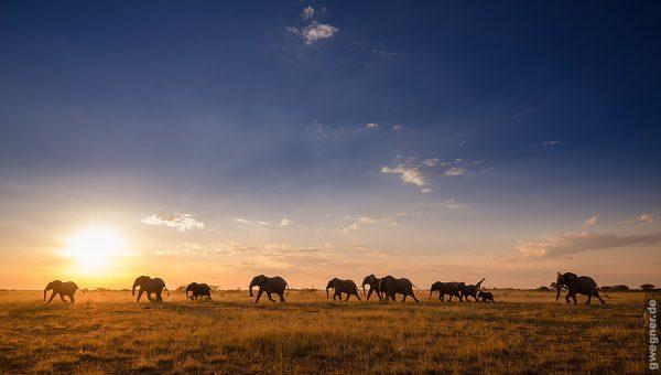 time-lapse-afrique-botswana-simbabwe