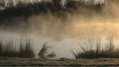 Photo of Balade matinale le long de la rivière d'IJssel près de Kampen