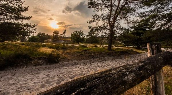 time-lapse-nature-brunssummerheide