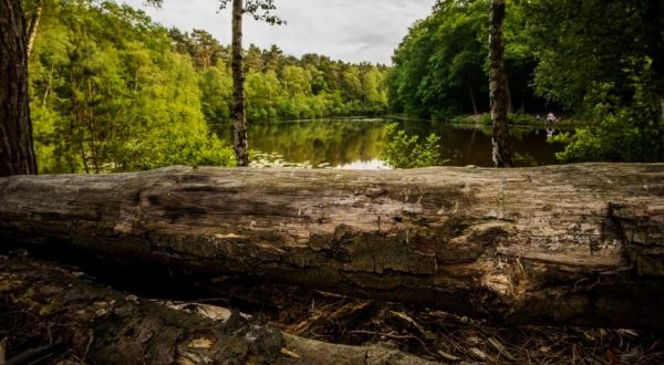 time-lapse-nature-brunssummerheide