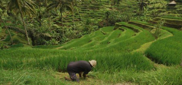 Voyage Culturel Bali