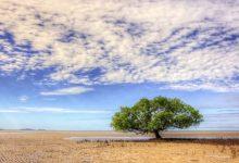 Photo of Partons à la découverte du Queensland