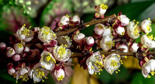 Beaute Fleurs Sublime Time Lapse
