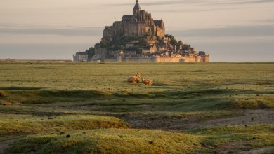Photo of Photographie du jour #575 : Des Moutons au Mont-Saint-Michel
