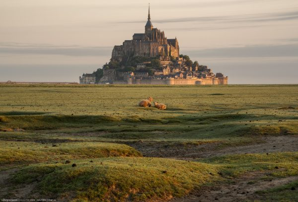 Photographie Moutons Mont Saint Michel