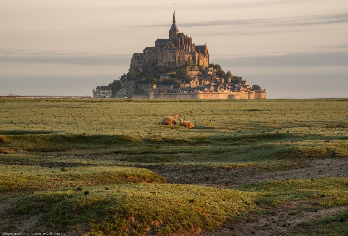Photographie Moutons Mont Saint Michel